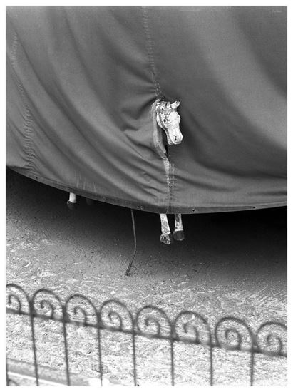 Picture of Stanko Abadzic: Paris